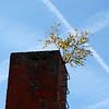 Skorsten med träd
