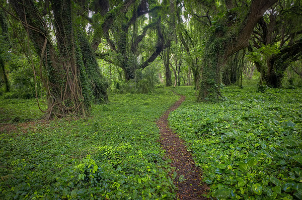 Waihee Path