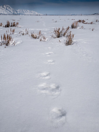 Infinite Mose Tracks