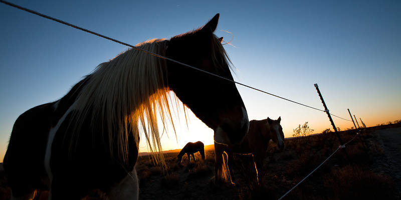 Another Horse throughout Sunset, Texas