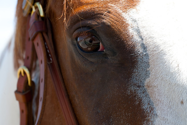 """The """"Eye of the Horse"""""""