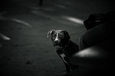DogClass-1006