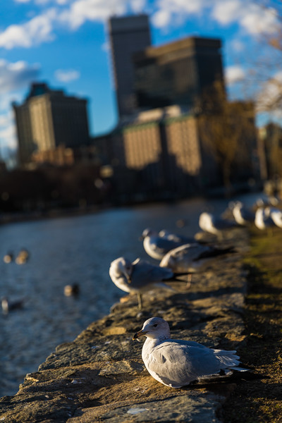 Seagulls in Providence, RI