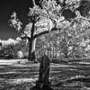 Hawthorne Florida Cemetery