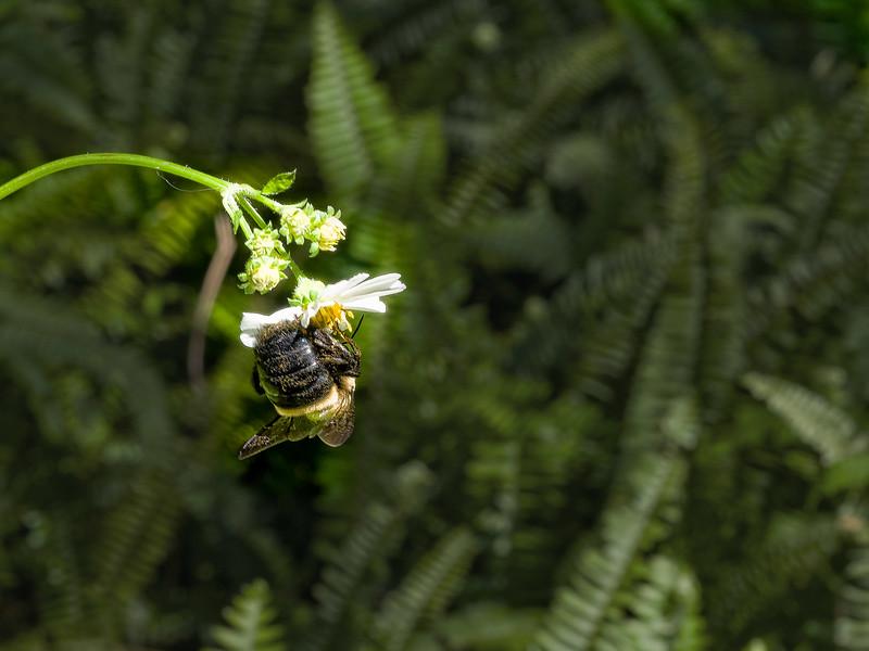 Bee on Wild flowers at Walter Jones Historic Park