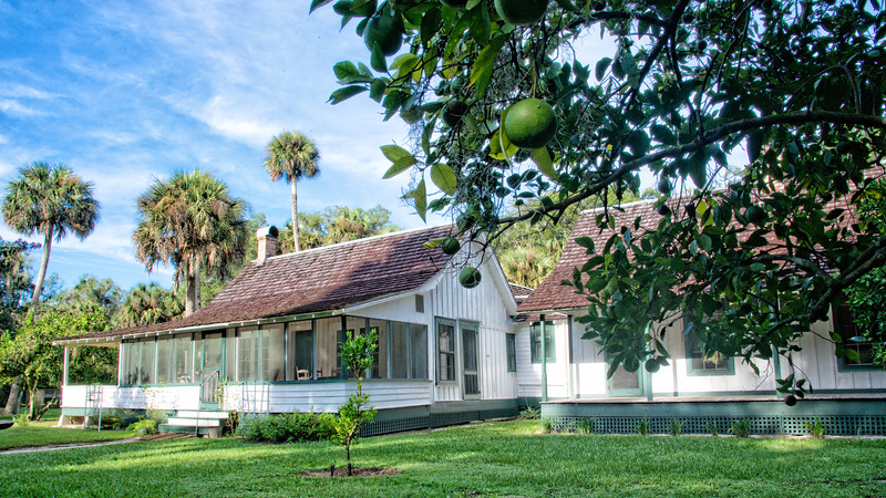 """Home of  Marjorie Kinnan Rawlings, Cross Creek, Florida. Ms. Rawlings was the 1939 Pulitzer Prize -winning author of """"The Yearling."""" Note: the green oranges on the tree in foreground."""