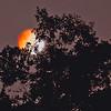 Blood Moon in Jacksonville Beach Florida