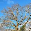 Jacksonville Beach Tree in Autumn