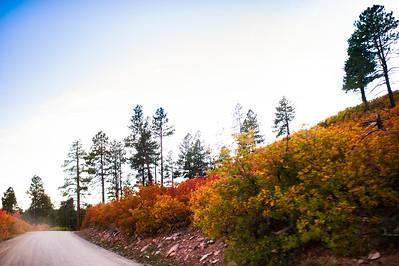 Autumn-1003
