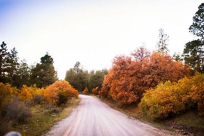 Autumn-1002