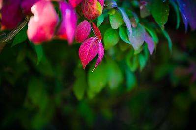 Fall-1006