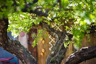 Trees-1002