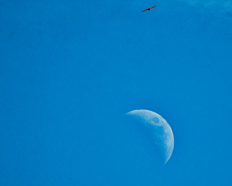 Flying Over The Moon