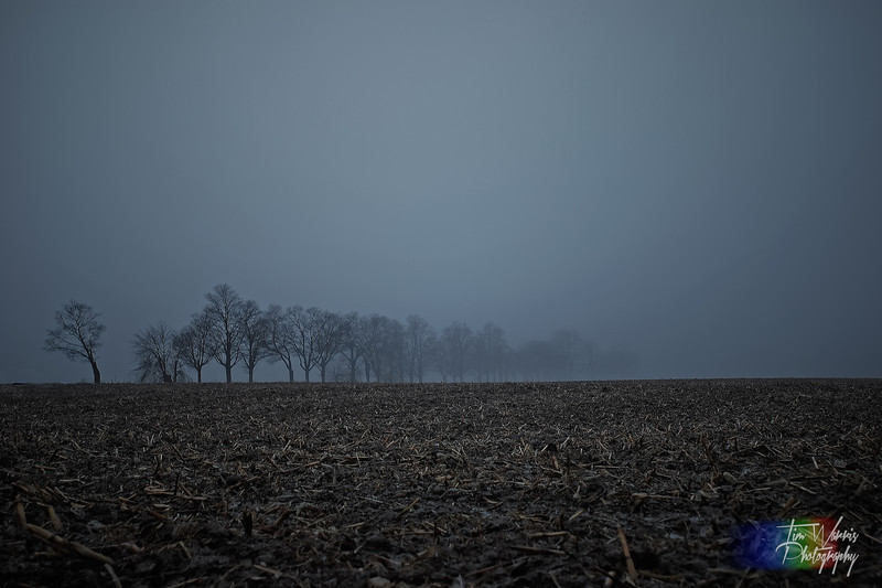 A dreary December day in Southern Ontario.  Foggy and grey, just the kind of weather that makes you want to head south...