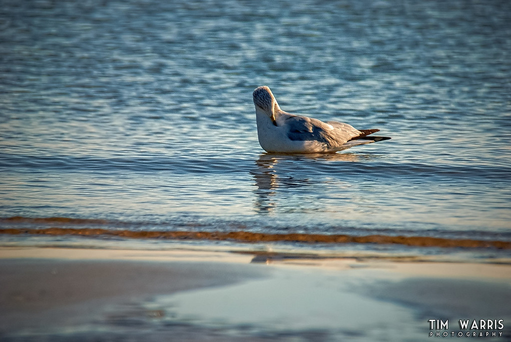 Bobbing in Lake Erie