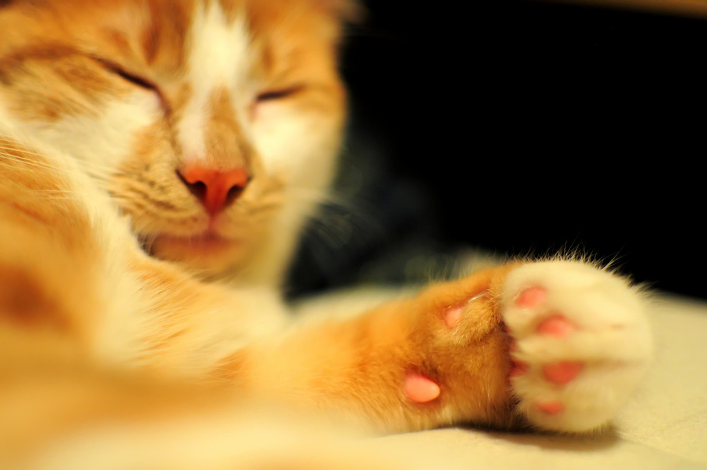 The paw