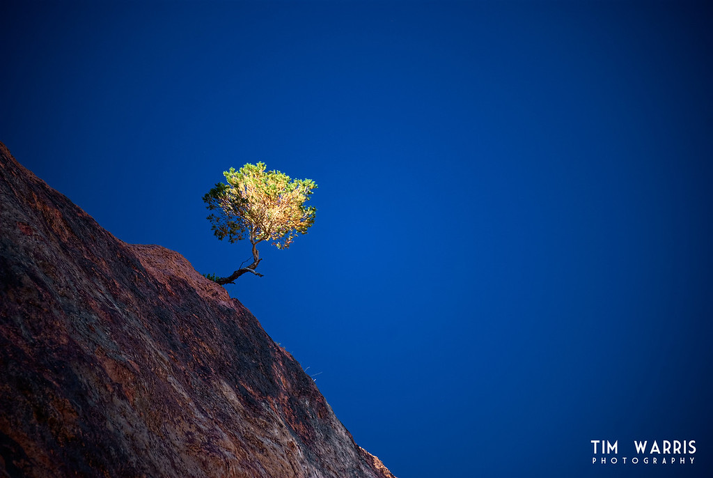 This lone shrub was hanging off the side of the Boulder Canyon wall above Hoover Dam. I like the way the light was shining through the leaves illuminating the bush, but everything else was in shadow....
