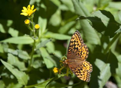 Butterfly49645