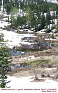 BeaverDams&Lodge88031
