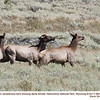 Elk F56070
