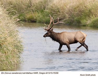 Elk B75358