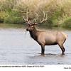 Elk B75351