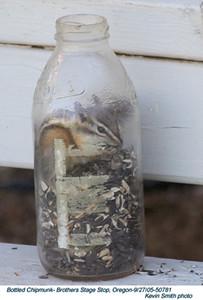 BottledChipmunk50781