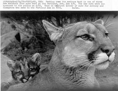 Mountain Lion & Cub 2