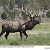 Elk M57282
