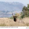 Elk B75363