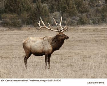 Elk M65047c