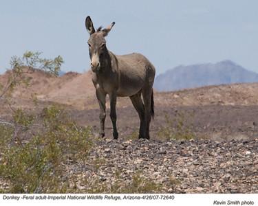 DonkeyA72640