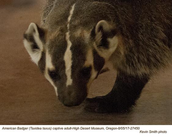 American Badger AC27450