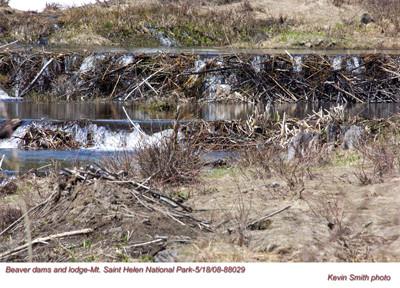 BeaverDams&Lodge88029