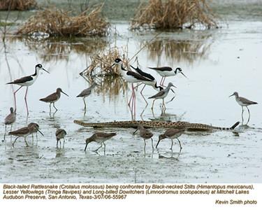 Birds&Rattler55967