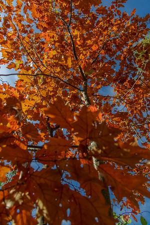 Gatineau Park Fall Colours, Gatineau Quebec (2014)