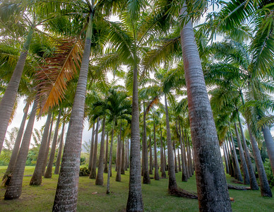 Marty's Palm grove