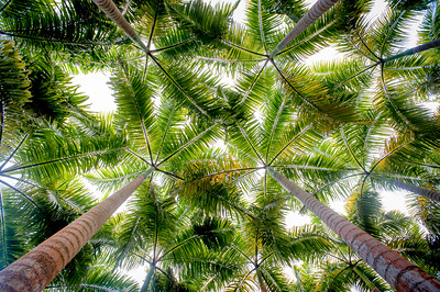 When you lie down in the middle of a Palm Grove and look up....this is what you see