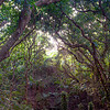 Inside the rain forest walk