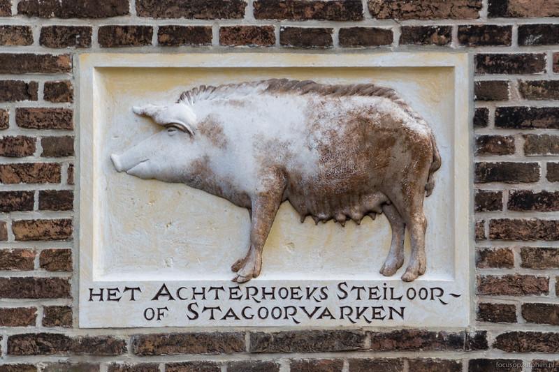 Het Achterhoeks Steiloor- of Stagoorvarken