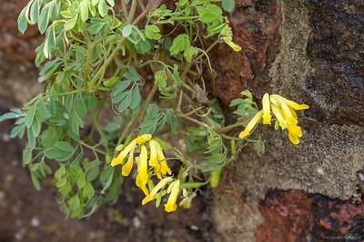 Een zeldzaam beschermd plantje