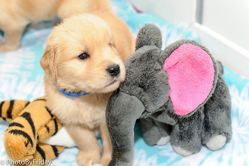 I love my elephant!