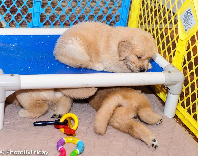 Mom bought us these beds but we like sleeping underneath
