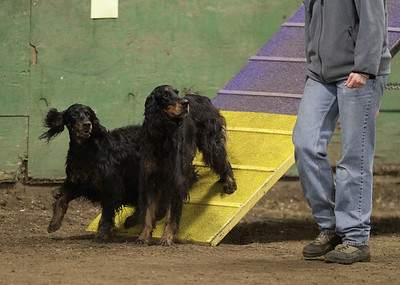 Our Agility Action!!