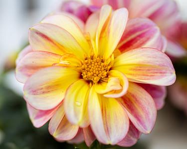 Spring Bloom 2