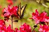 2016-04-03-Butterfly-2