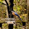 2016-04-03-Bluebird-3
