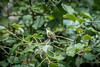 2017-05-08-hummingbird