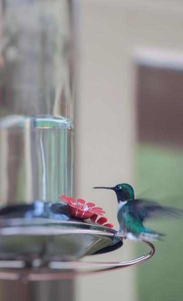 2015-05-27-Hummingbird