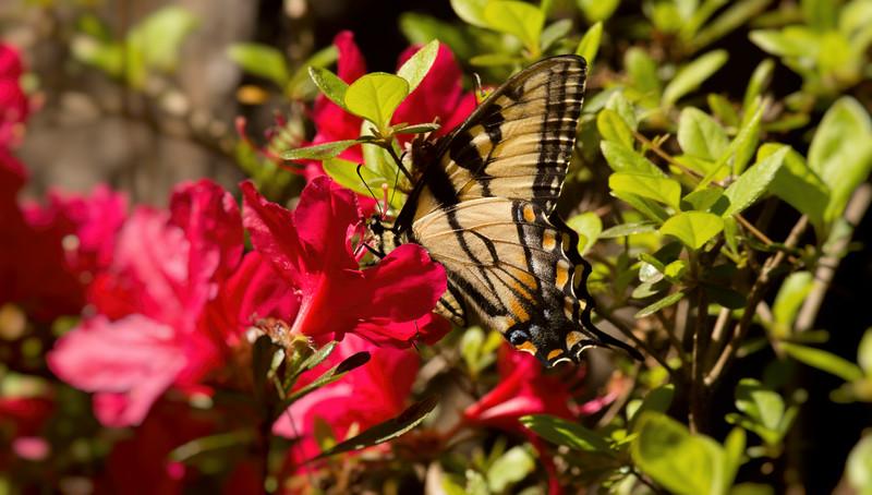 2016-04-03-Butterfly-3